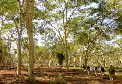 PAFURI WALKING SAFARI