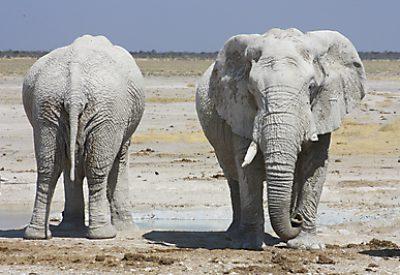 Etosha Namibia lodge safari