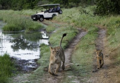 Big five safari Botswana Savute