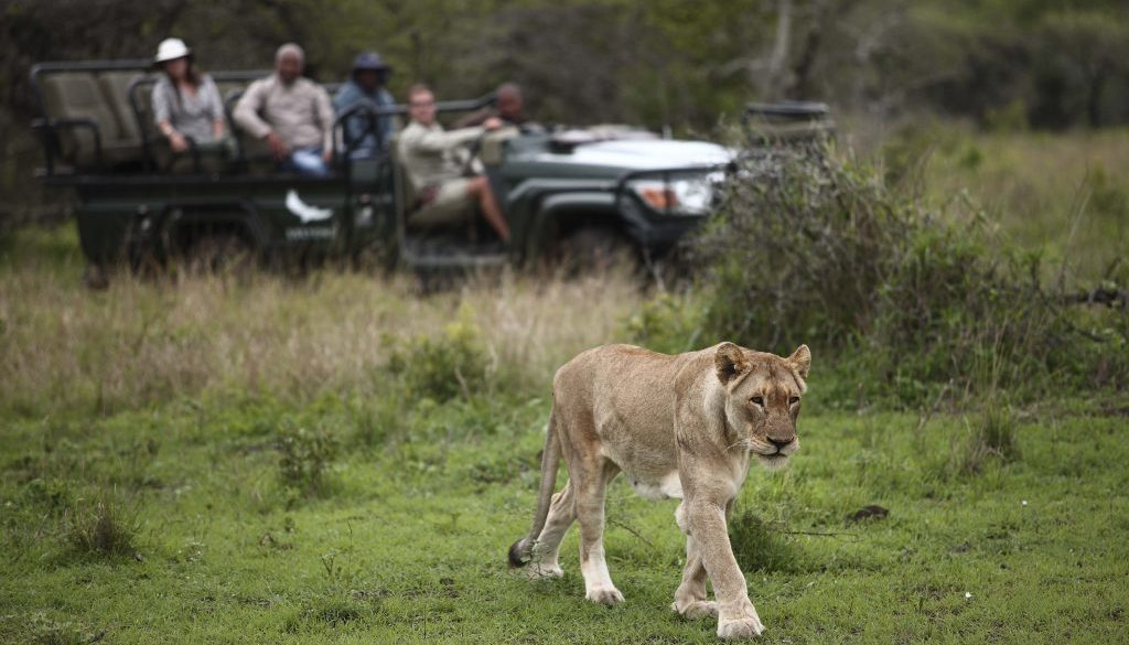 Where and when to go on safari