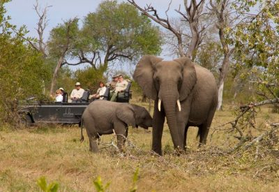 Kruger Park safari tour elephants