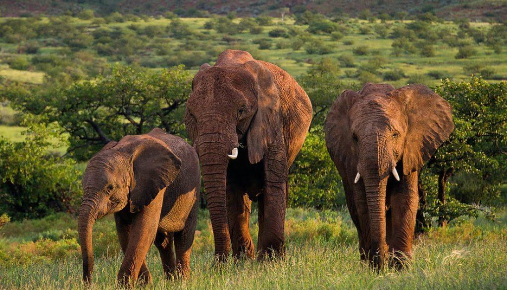 Damaraland namibia self drive safari elephant