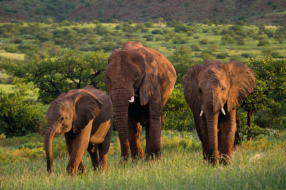 Damaraland namibia self drive safari elephant