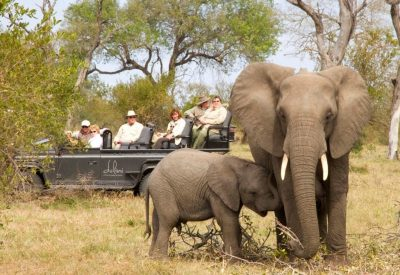 Kruger Park safari South Africa elephant