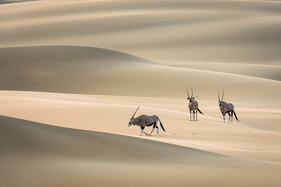 Namibia self drive safari Etosha