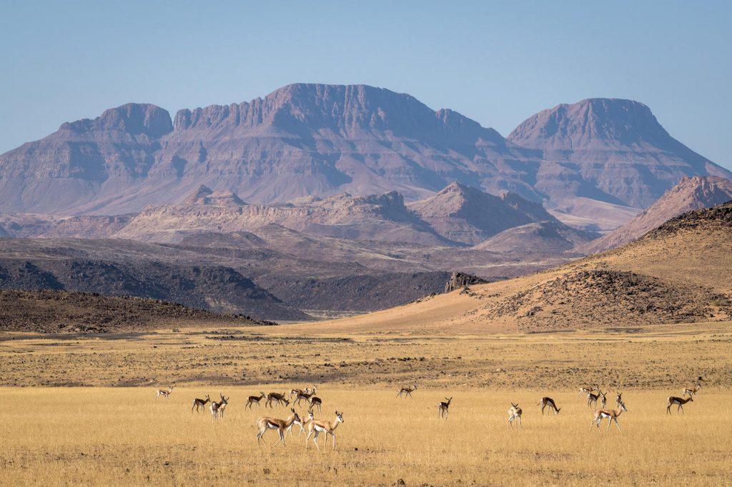 Damaraland Springbok - Namibia Exploration