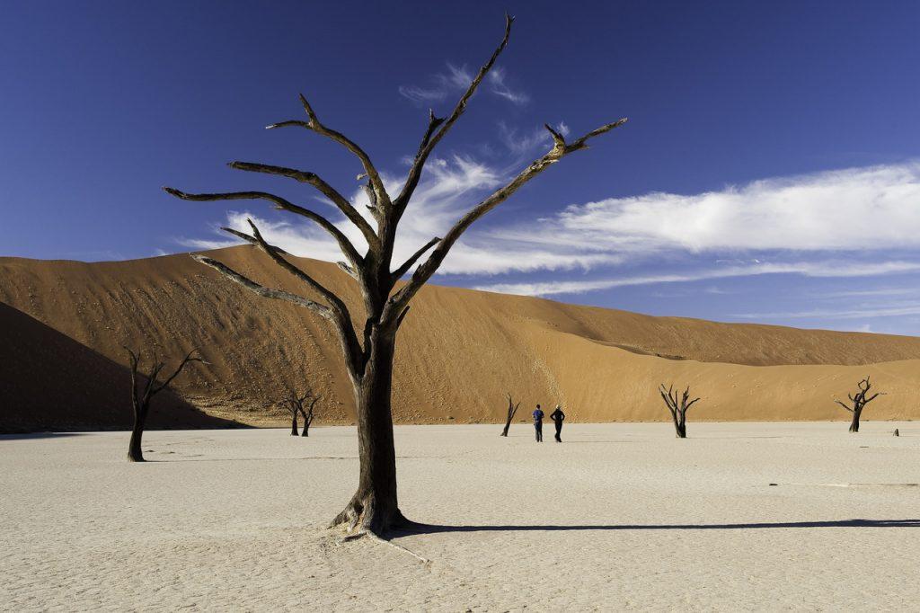 Deadvlei - Namibia Desert Safari