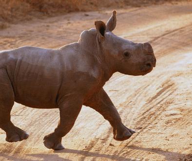 Tswalu Kalahari Private Game Reserve, luxury safari