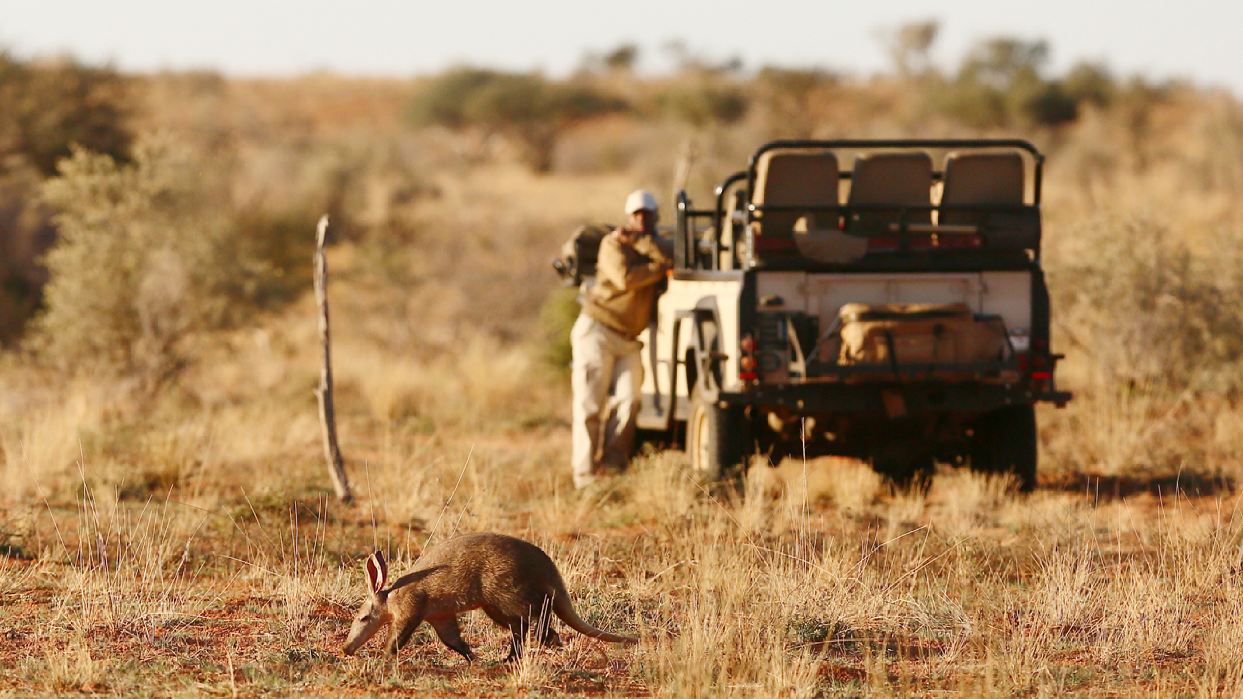 Tswalu Kalahari Private Game Reserve, luxury safari