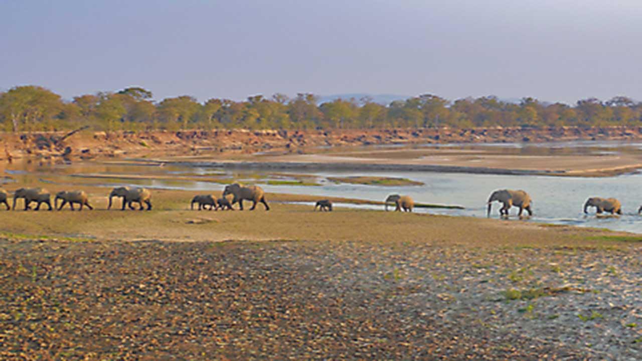 Zambia & Malawi Exploration - South Luangwa - Elephant Crossing