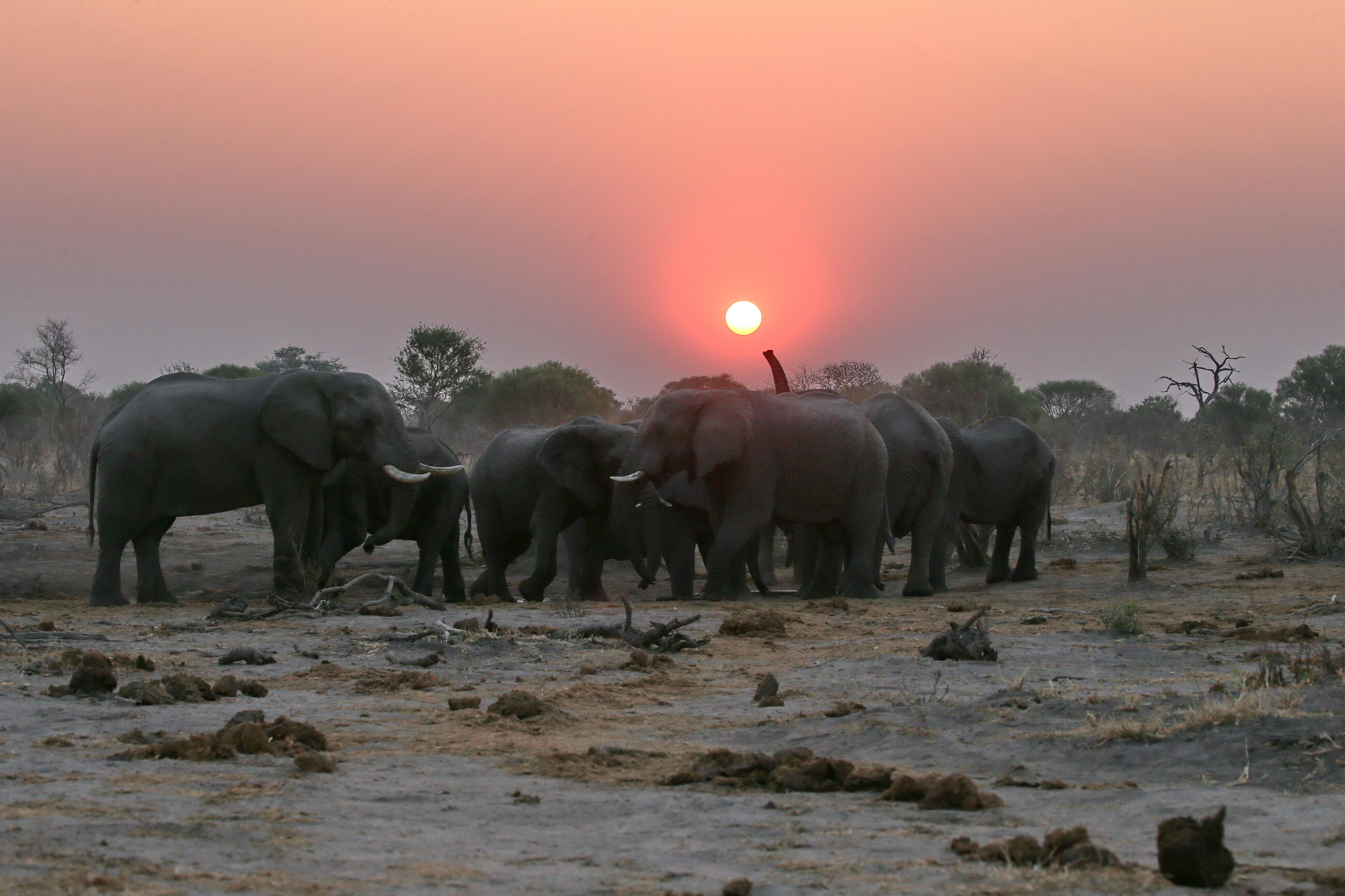 skybeds_-_elephants_sunset