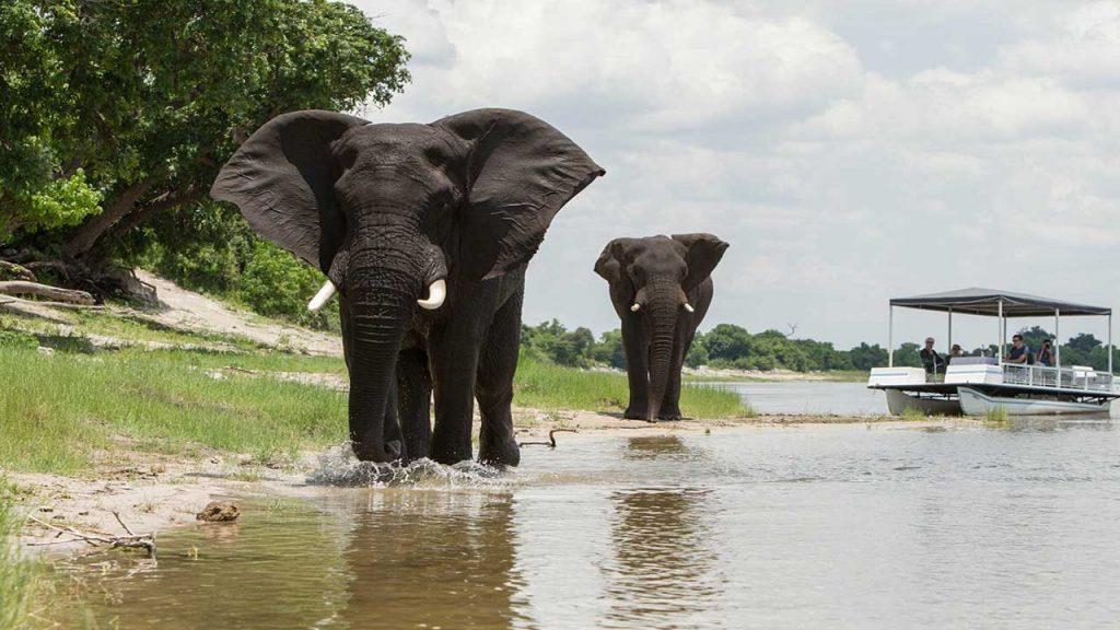 Botswana-Private-Reserve-Lodge-Safari---Chobe-Elephants - Copy