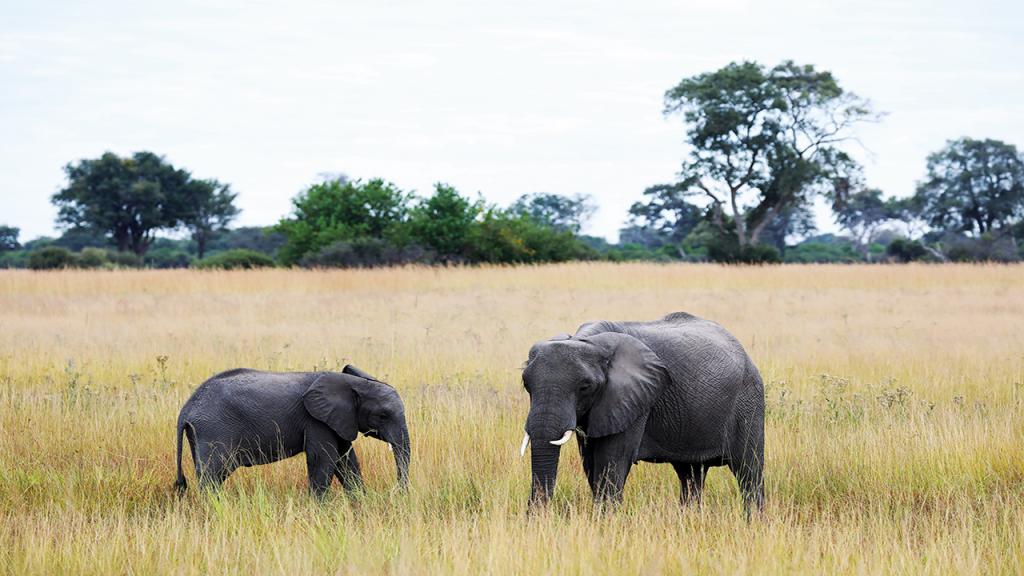 Botswana-Private-Reserve-Lodge-Safari---Khwai-Private-Reserve-Elephant - Copy