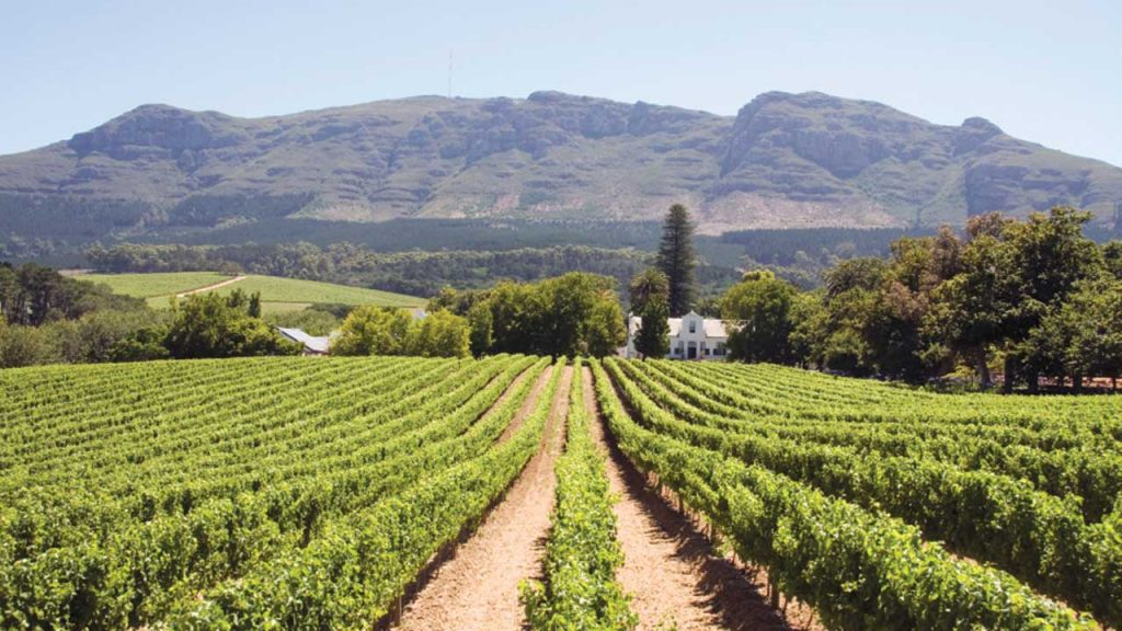 Cape-Winelands