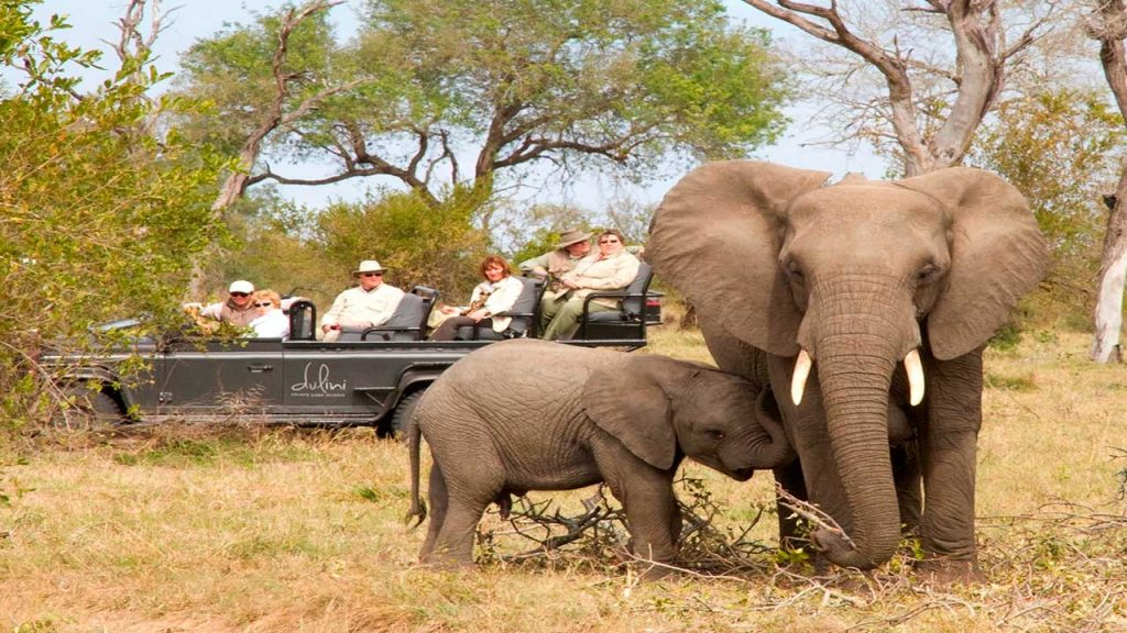 Elephant-on-game-drive