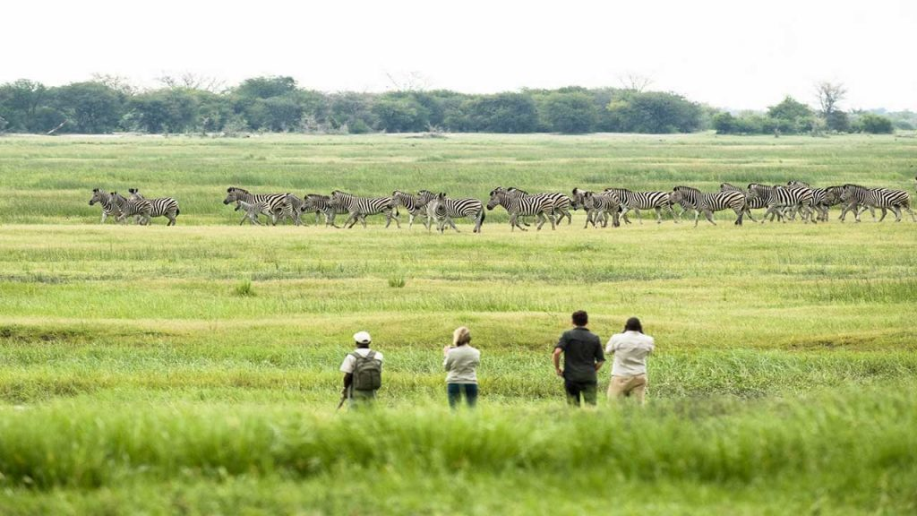 Muchenje---Guided-walk-with-Zebra - Copy