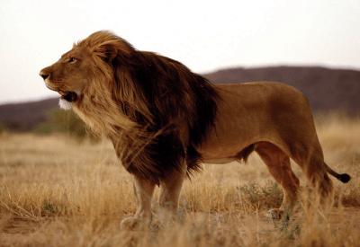 Kalahari Luxury Camping Safari
